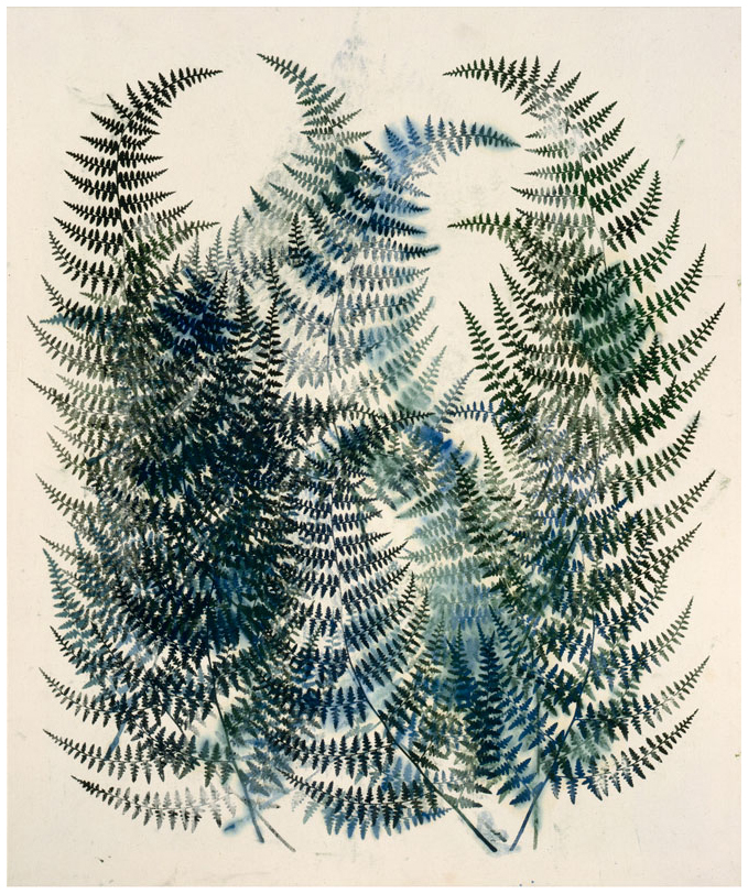 Pteris Viscosa, 1996